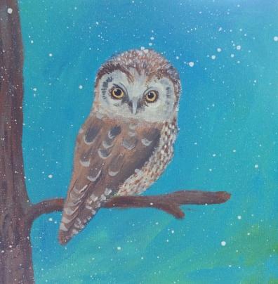boral owl